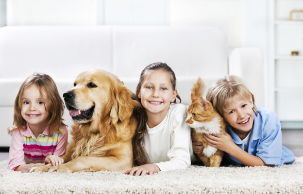 Carpet Cleaning | Gentle Steam Edmonton Alberta